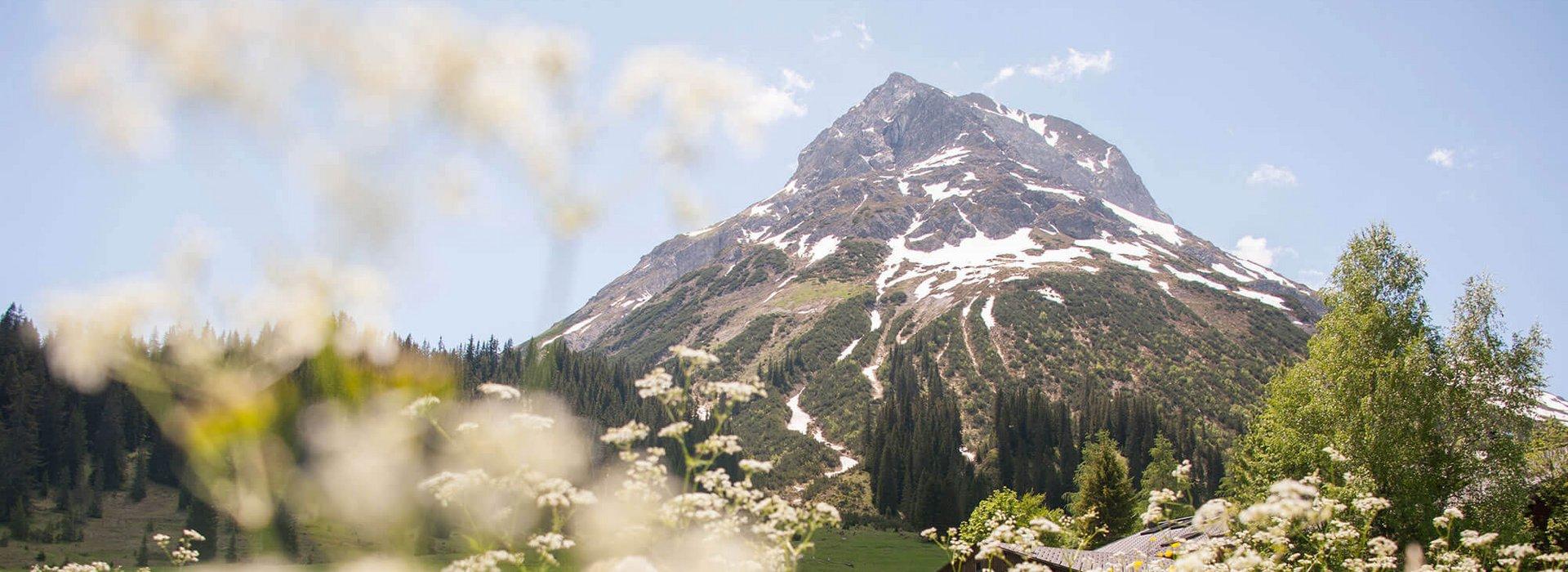 Blumenwiese vor Berg